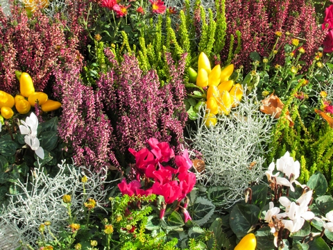 Colourful autumn flowers in garden